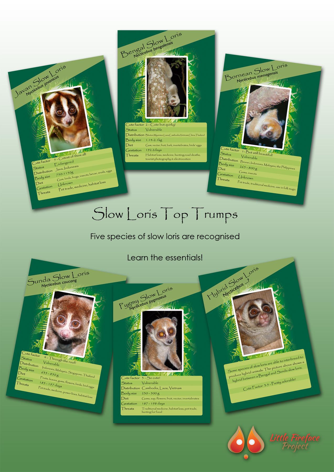 Species Fact Sheet! - Little Fireface ProjectLittle Fireface Project