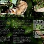 slow loris flyer 2