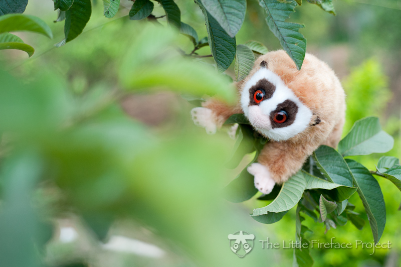 Slow Loris Story Writing Competition