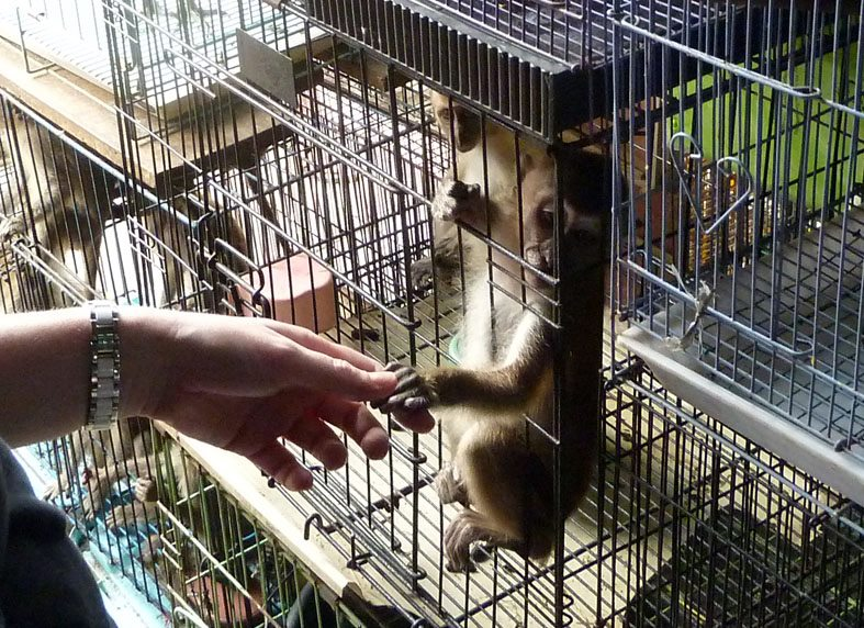 MacaqueReachingOutNov2012