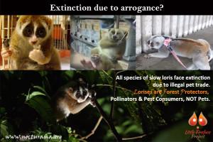 ExtinctionDuetoArrogance
