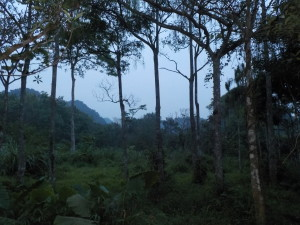 Walking towards the mountains to find the cu li as the sun goes down.