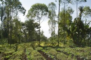 2014 agroforest fragment