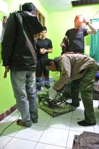 2015 Nekaris - Listrika Rescue_Cikananga (3)