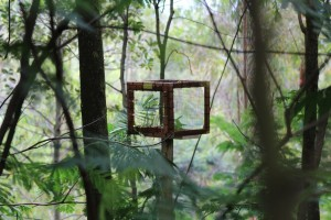 - a pollination box, to prevent bats and birds from pollinating
