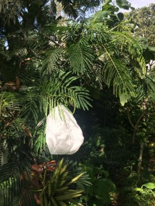 - a pollen-proof bag