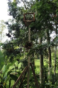 - a pollination box, set up in the forest