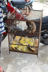 Illegal pet trade