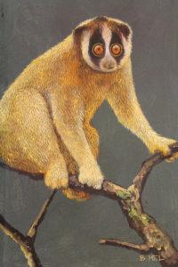 Original painting of Slow loris