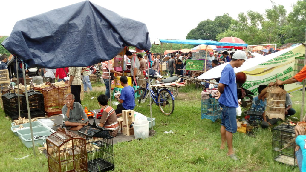 Riuh Pasar Burung di Cirebon