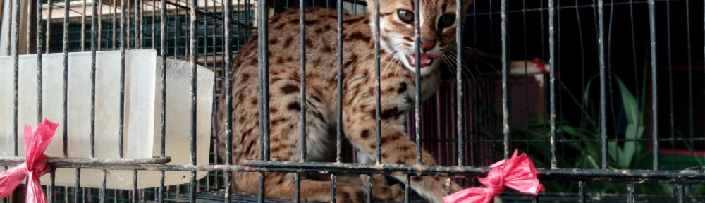 Tackling Wildlife Trade